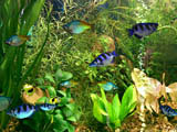 Click to view Fish Aqua 3D Screensaver 1.51.4 screenshot