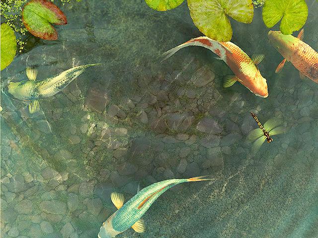 Koi fish 3d screensaver download animated 3d screensaver for Koi pond screensaver