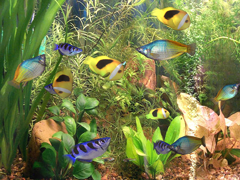 3d, screensaver, screen saver, aquarium, fish