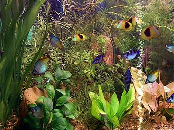 Das große Aquarium 3D play video
