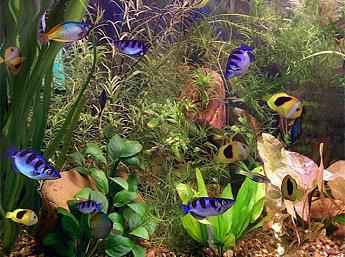 Aquarium 3D Image plus grande