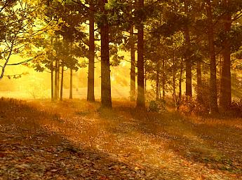 Autumn Forest 3D Screensaver