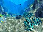Coral World 3D larger image