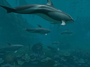 Dolphins - Pirate Reef 3D