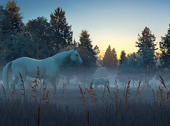 Fog Horses 3D Screensaver