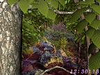 Univers Forestier 3D Image plus grande