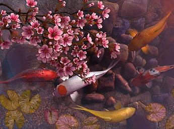 Koi Pond - Sakura 3D Screensaver