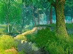 Summer Forest 3D play video