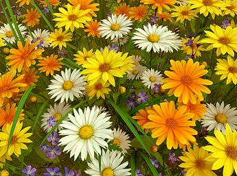 Wildflowers 3D Salvapantallas