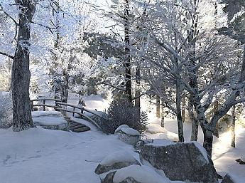 Winter Walk 3D Image plus grande
